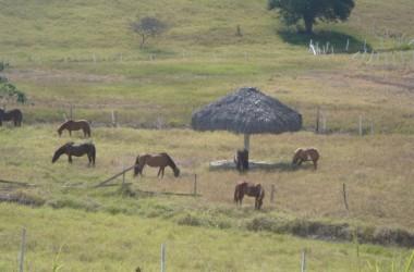 Olon Ecuador - Build Your Dream House In The Sky