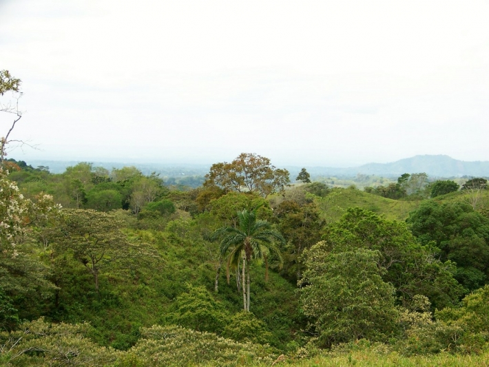 Volcan-Panama-property-panamarealtor5425-2.jpg