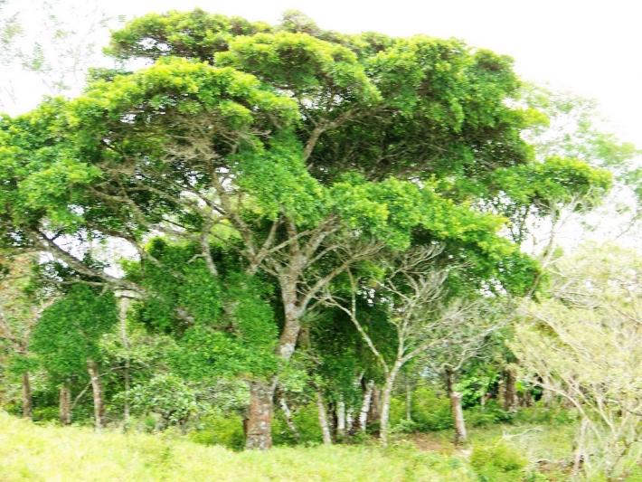 Volcan-Panama-property-panamarealtor5425-3.jpg