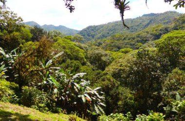 Anton Valley Panama - Tropical Forest Estate in El Valle de Antón