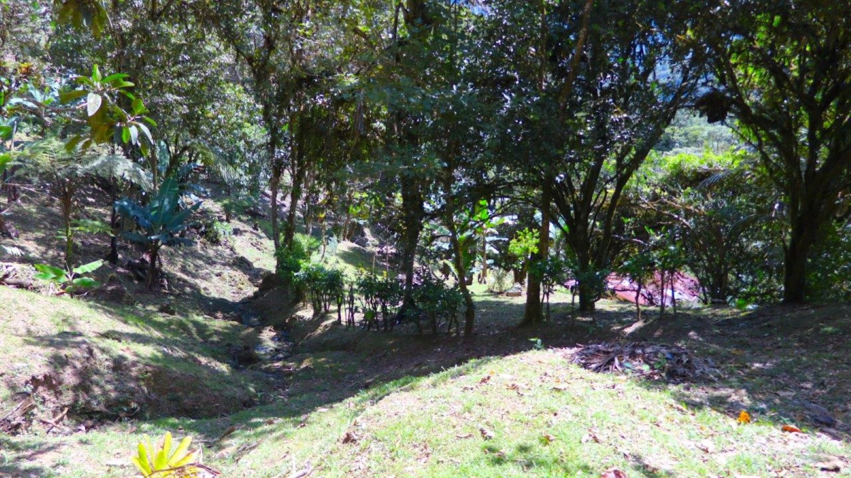 Real Estate In Anton Valley Panama Tropical Forest