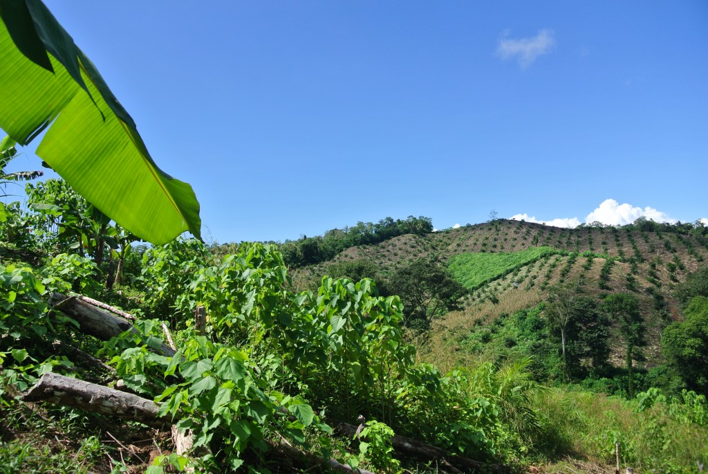 Osa-Peninsula-Costa-Rica-property-costaricarealestateservicePROP-25368-1.jpg