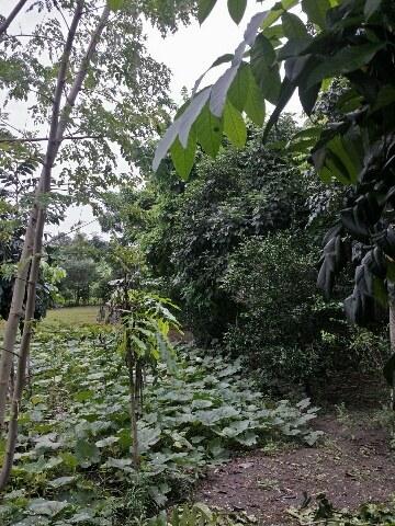 Olón-Ecuador-property-LL1700174-4.jpg