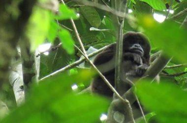 Olon Ecuador - Natural Reserve For Sale In Olon