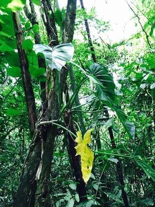 Olon-Ecuador-property-513783-9.jpg
