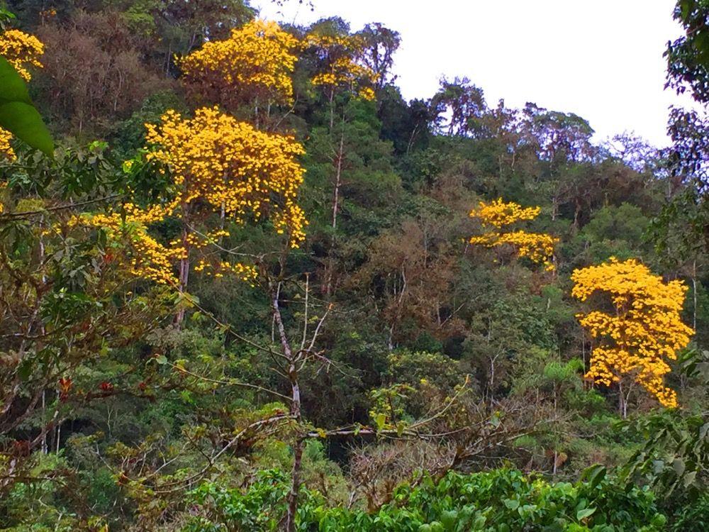 Manabi-Ecuador-property-514327-3.jpg