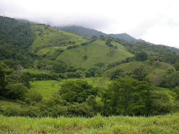 Osa-Peninsula-Costa-Rica-property-costaricarealestateservicePROP-8519-3.jpg