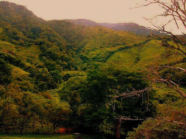 Osa-Peninsula-Costa-Rica-property-costaricarealestateservicePROP-8519-4.jpg