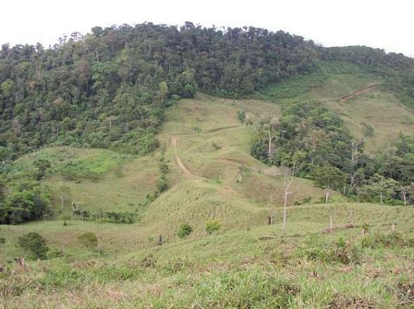 Osa-Peninsula-Costa-Rica-property-costaricarealestateservicePROP-8519-9.jpg
