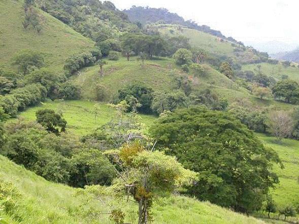 Osa-Peninsula-Costa-Rica-property-costaricarealestateservicePROP-8519.jpg