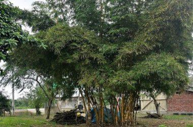 Montanita Ecuador - Bambu Dorado: Near the Coast Home Construction Site For Sale in Montañita