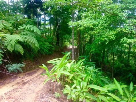 UVITA-Costa-Rica-property-costaricarealestateUVI158-2.jpg
