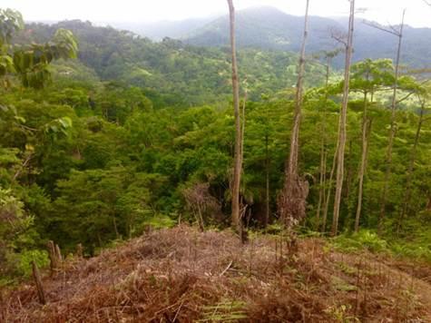 UVITA-Costa-Rica-property-costaricarealestateUVI158-6.jpg