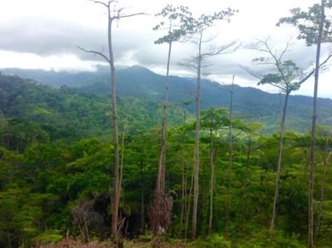 UVITA-Costa-Rica-property-costaricarealestateUVI158-7.jpg