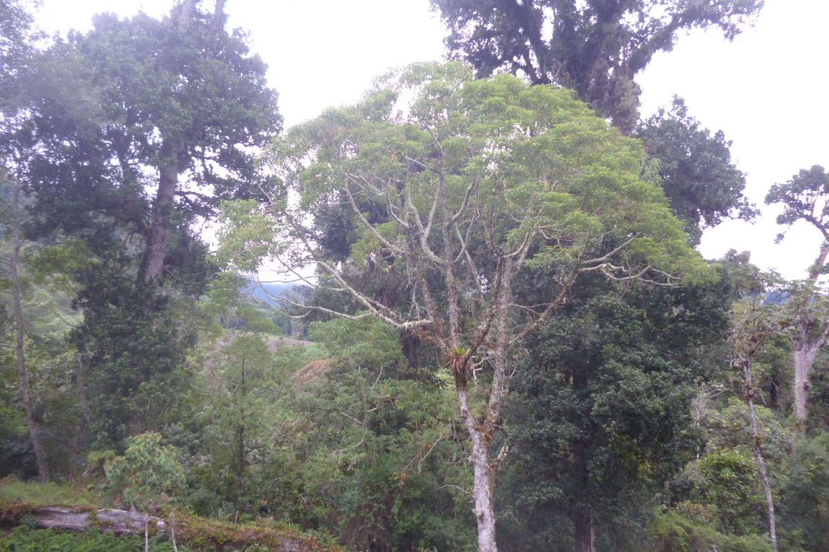 Volcan-Panama-property-panamarealtor9232-10.jpg