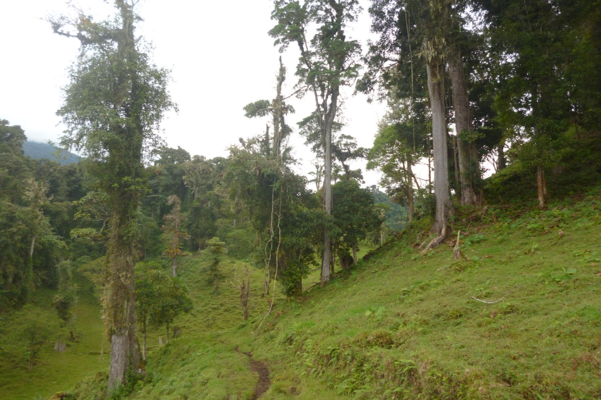 Volcan-Panama-property-panamarealtor9232-8.jpg