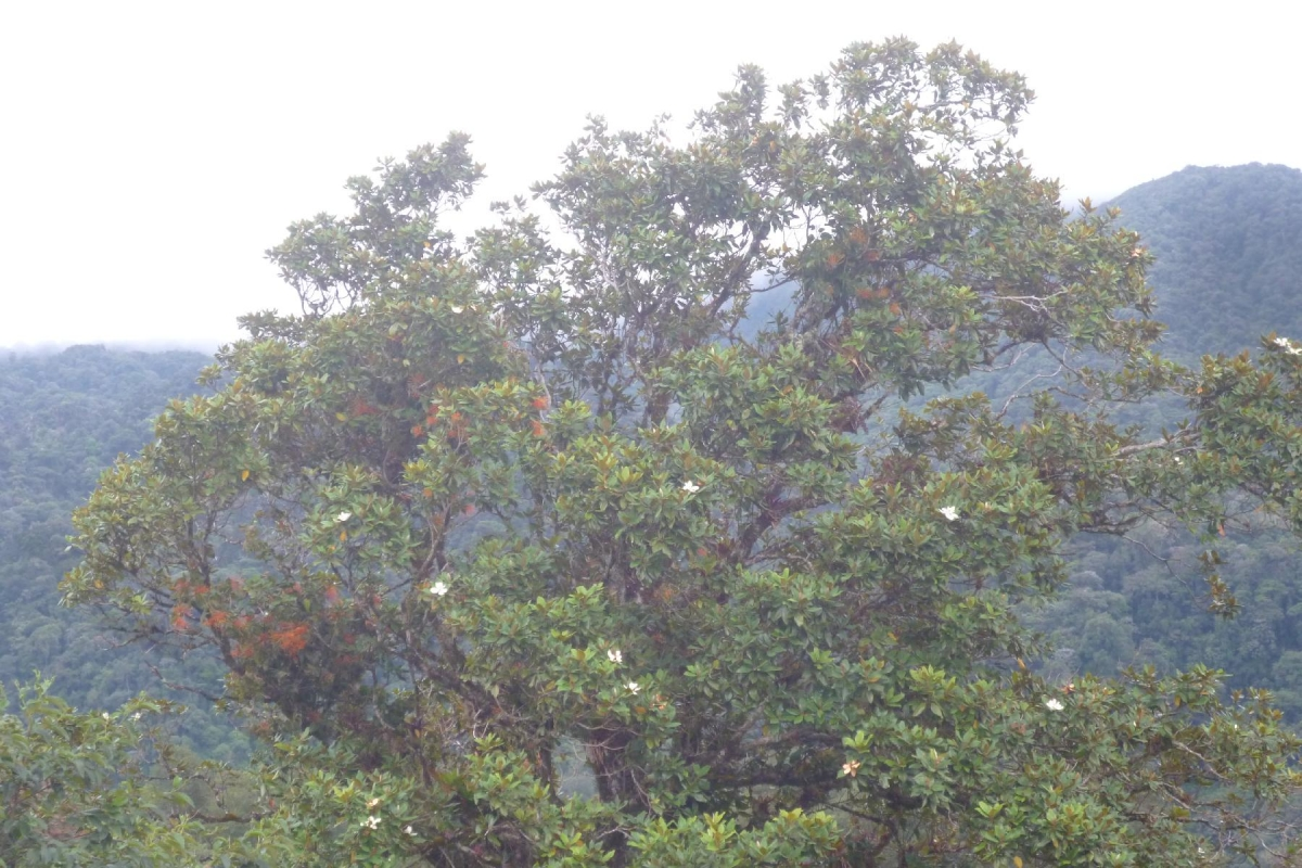 Volcan-Panama-property-panamarealtor9232-9.jpg