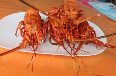 Ecuador - Ayangue Lobster Bay: Very Rare Ocean Front 1000m2 Lot