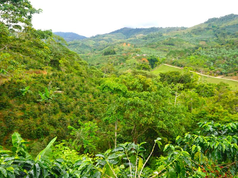 Perez-Zeledon-Costa-Rica-property-dominicalrealty9850-10.jpg