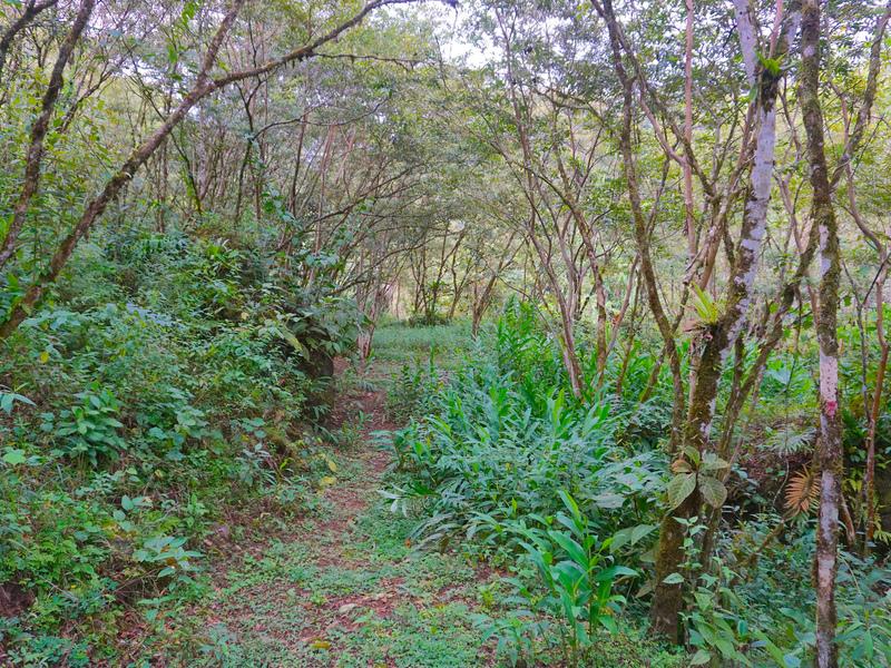Perez-Zeledon-Costa-Rica-property-dominicalrealty9850-3.jpg