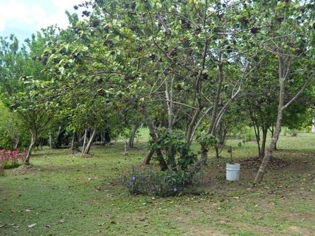 San-Carlos-Panama-property-panamarealtor10178-2.jpg