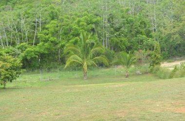 Panama - FINCA SAN CARLOS