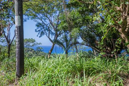 Roatan-Honduras-property-roatanlife1198-1.jpg