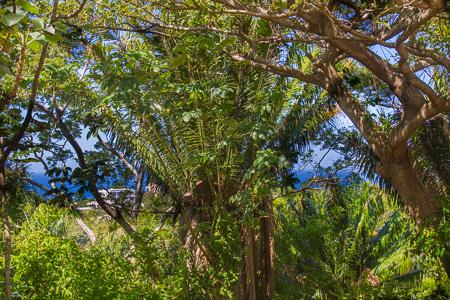 Roatan-Honduras-property-roatanlife1198-4.jpg