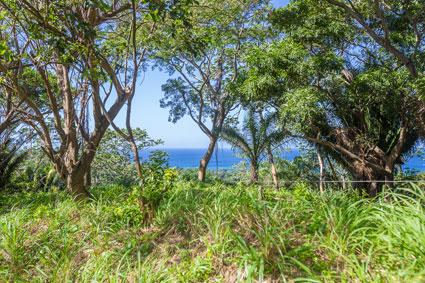 Roatan-Honduras-property-roatanlife1198.jpg