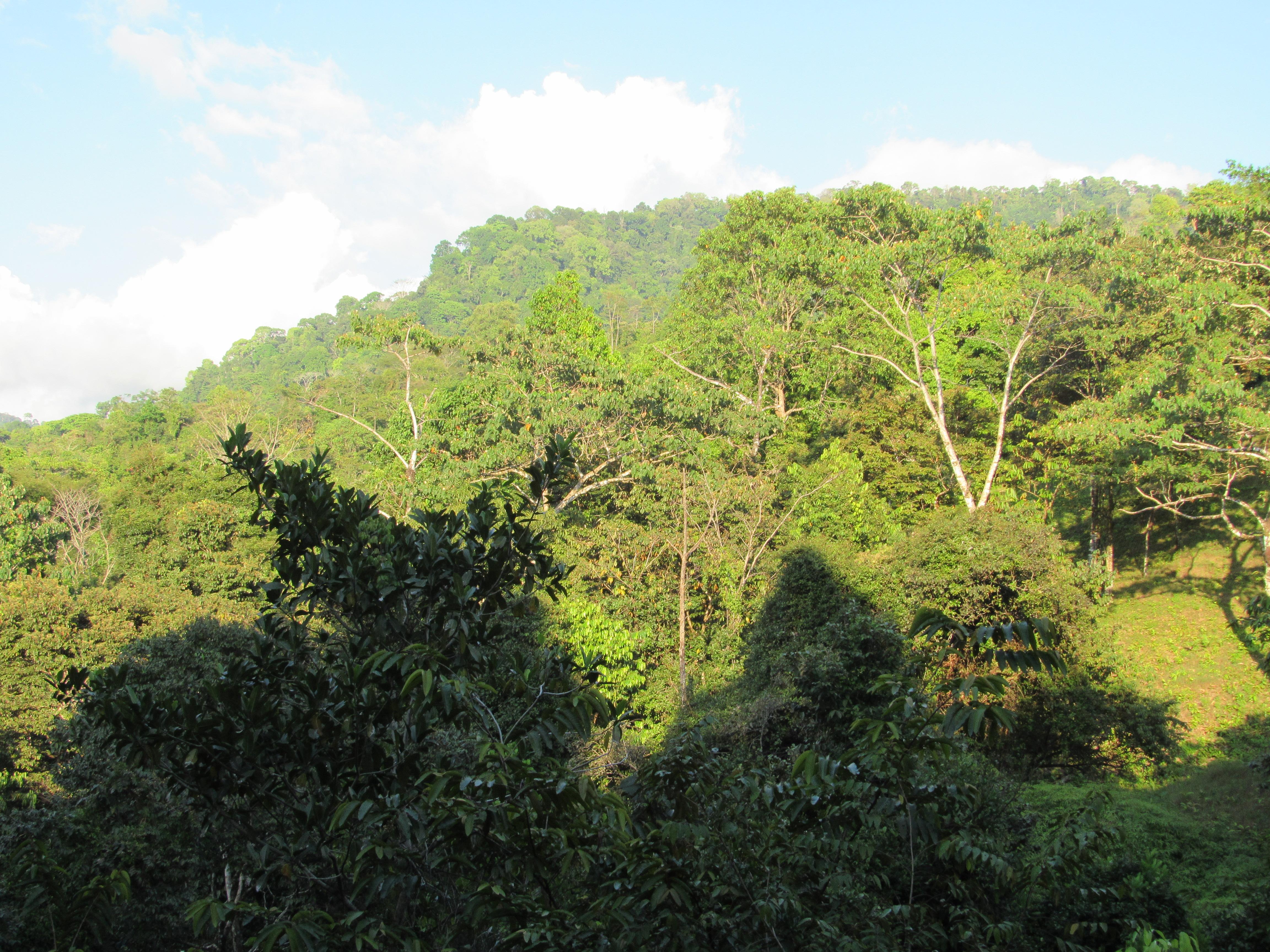 Matapalo-Costa-Rica-property-costaricarealestateMAT080-4.jpg