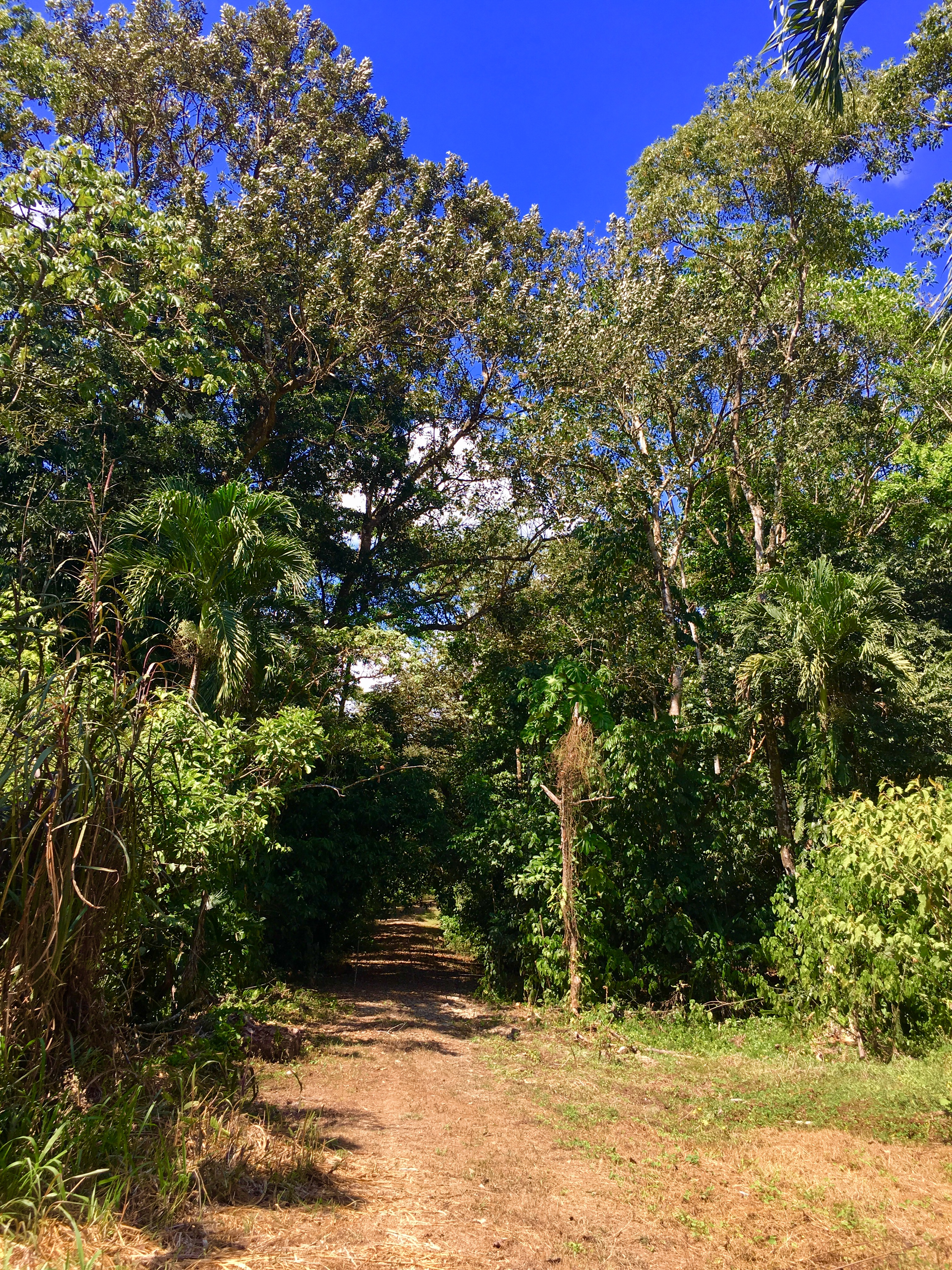 Dominical-Costa-Rica-property-costaricarealestateDOM331-10.jpg