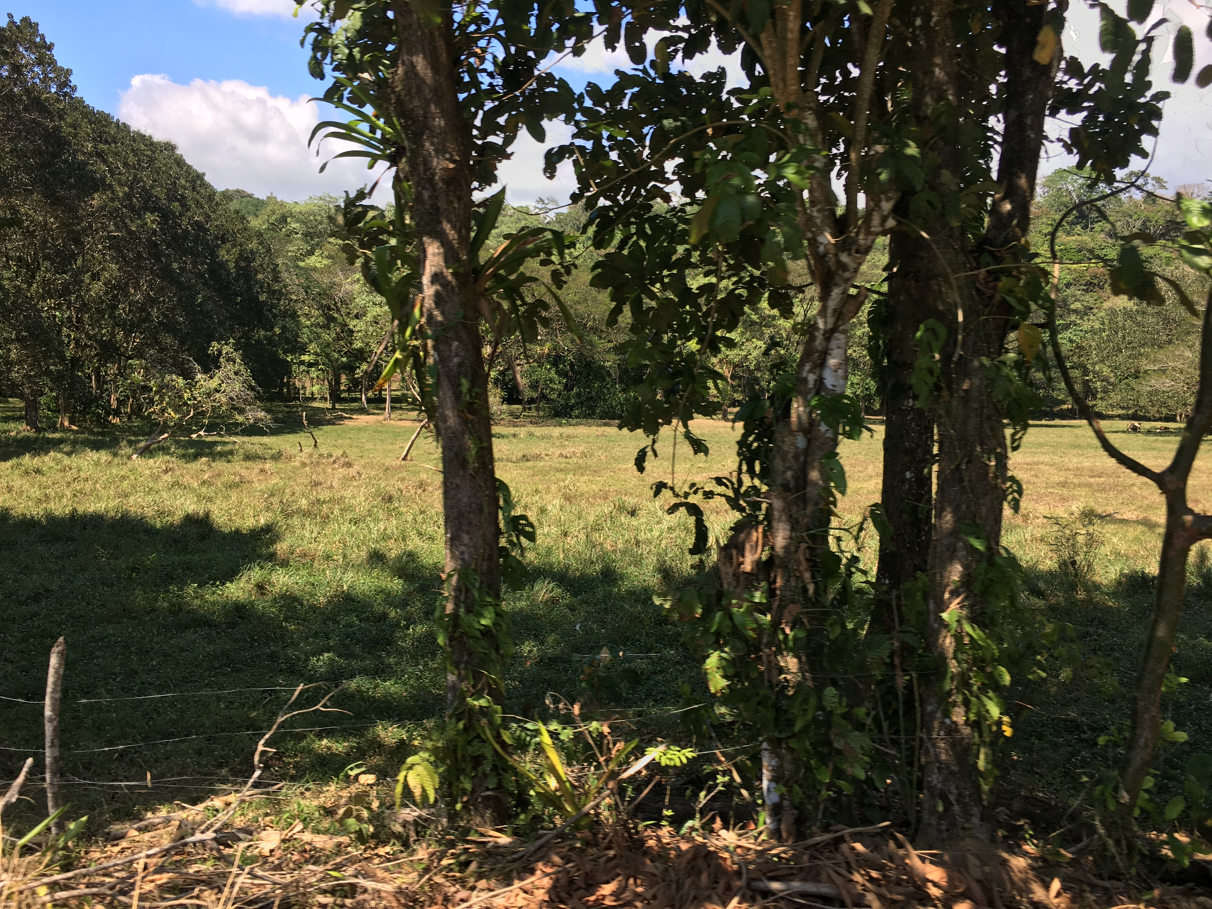 Dominical-Costa-Rica-property-costaricarealestateDOM331-5.jpg