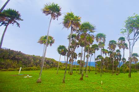 Roatan-Honduras-property-roatanlife1211-3.jpg