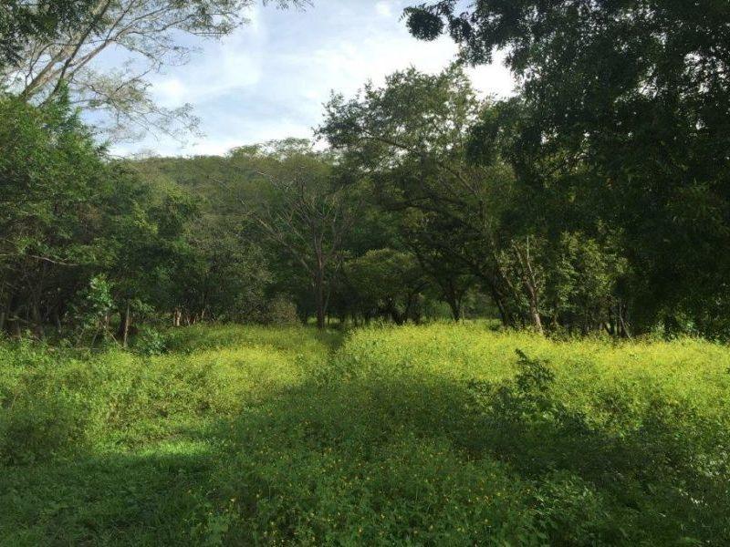 Tamarindo-Costa-Rica-property-dominicalrealty10116-8.JPEG
