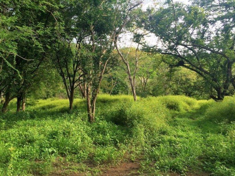 Tamarindo-Costa-Rica-property-dominicalrealty10116-9.JPEG