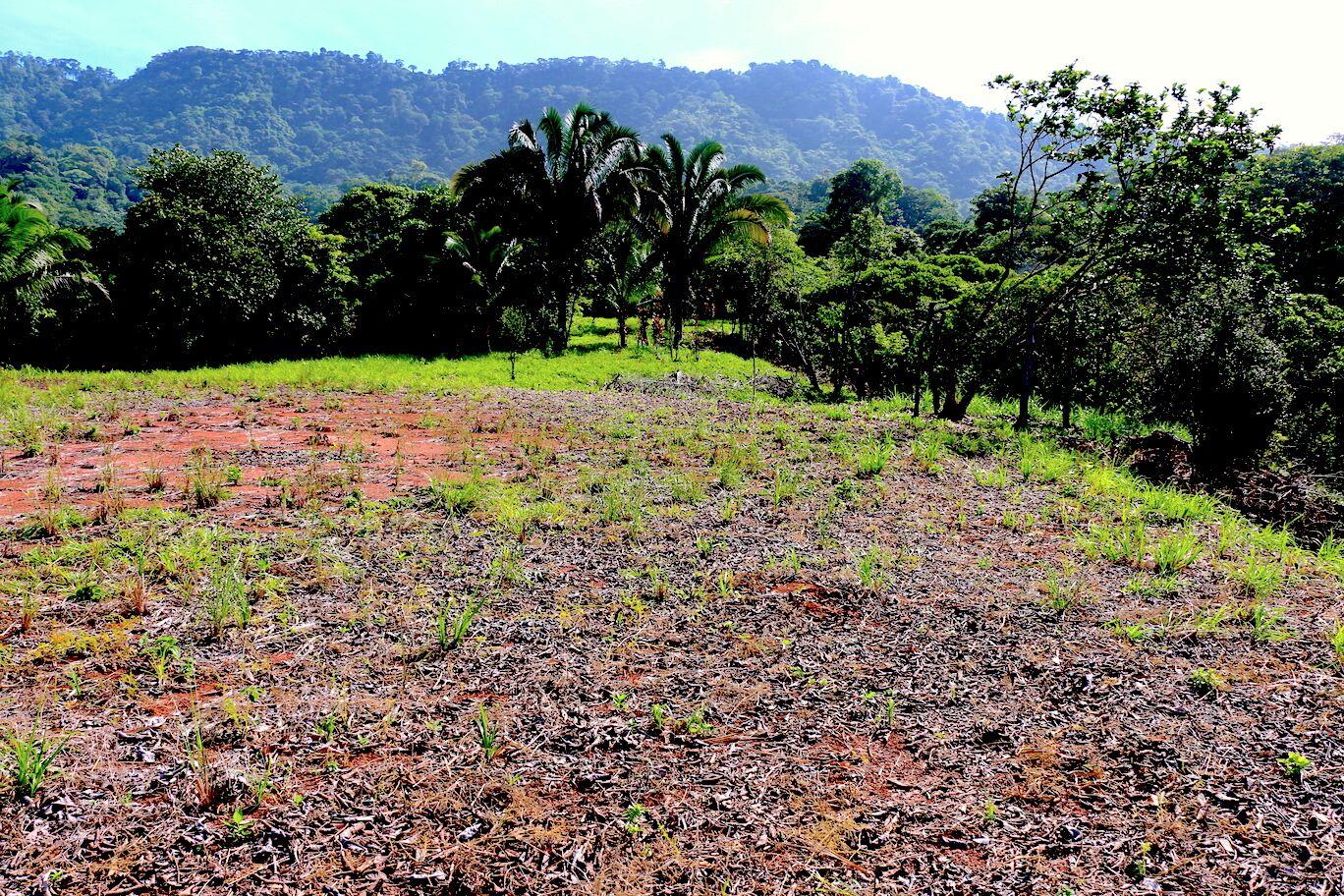 Dominical-Costa-Rica-property-costaricarealestateDOM335-8.jpeg