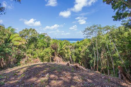 Roatan-Honduras-property-roatanlife1224-1.jpg