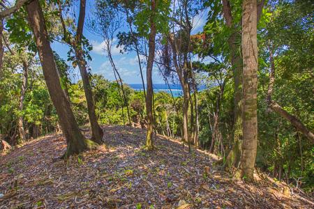 Roatan-Honduras-property-roatanlife1224.jpg