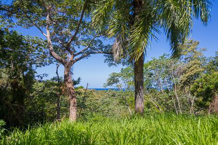 Roatan-Honduras-property-roatanlife1228-1.jpg