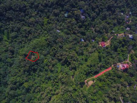 Roatan-Honduras-property-roatanlife1228-11.jpg