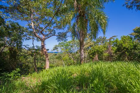 Roatan-Honduras-property-roatanlife1228-2.jpg