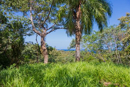 Roatan-Honduras-property-roatanlife1228-6.jpg