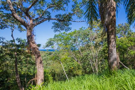 Roatan-Honduras-property-roatanlife1228.jpg