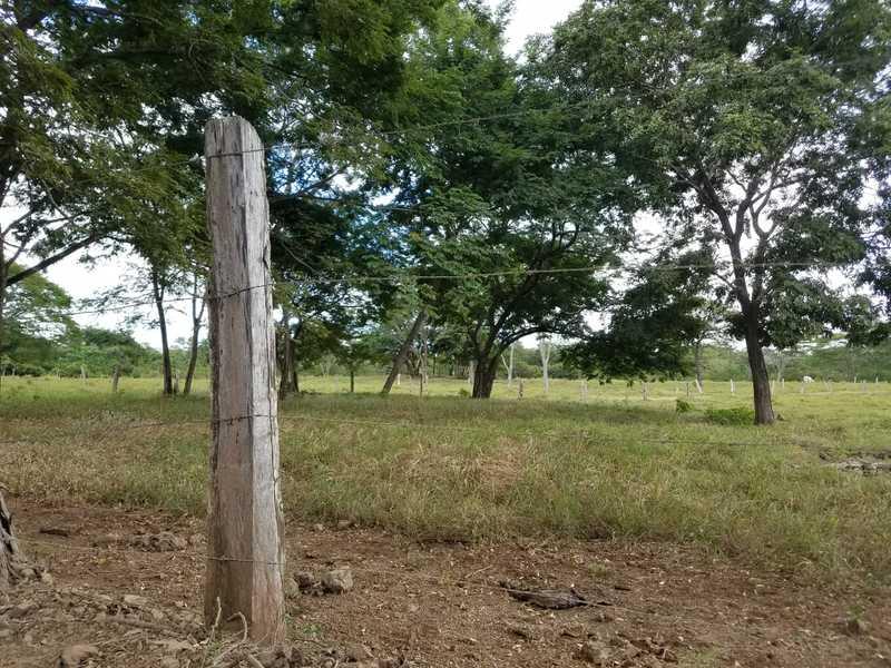Matapalo-Costa-Rica-property-dominicalrealty10343-4.jpg