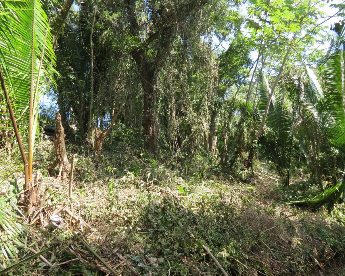 Roatan-Honduras-property-roatanlife16-530-10.jpg
