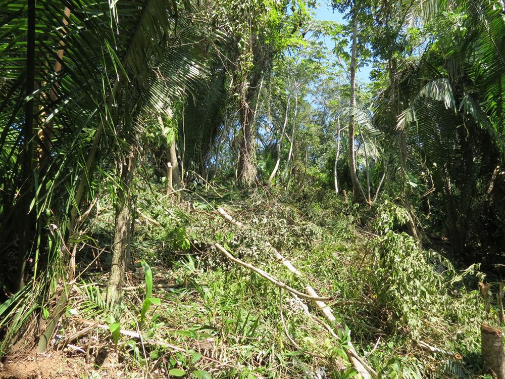 Roatan-Honduras-property-roatanlife16-530-11.jpg