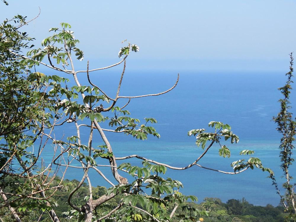 Roatan-Honduras-property-roatanlife16-530-2.jpg