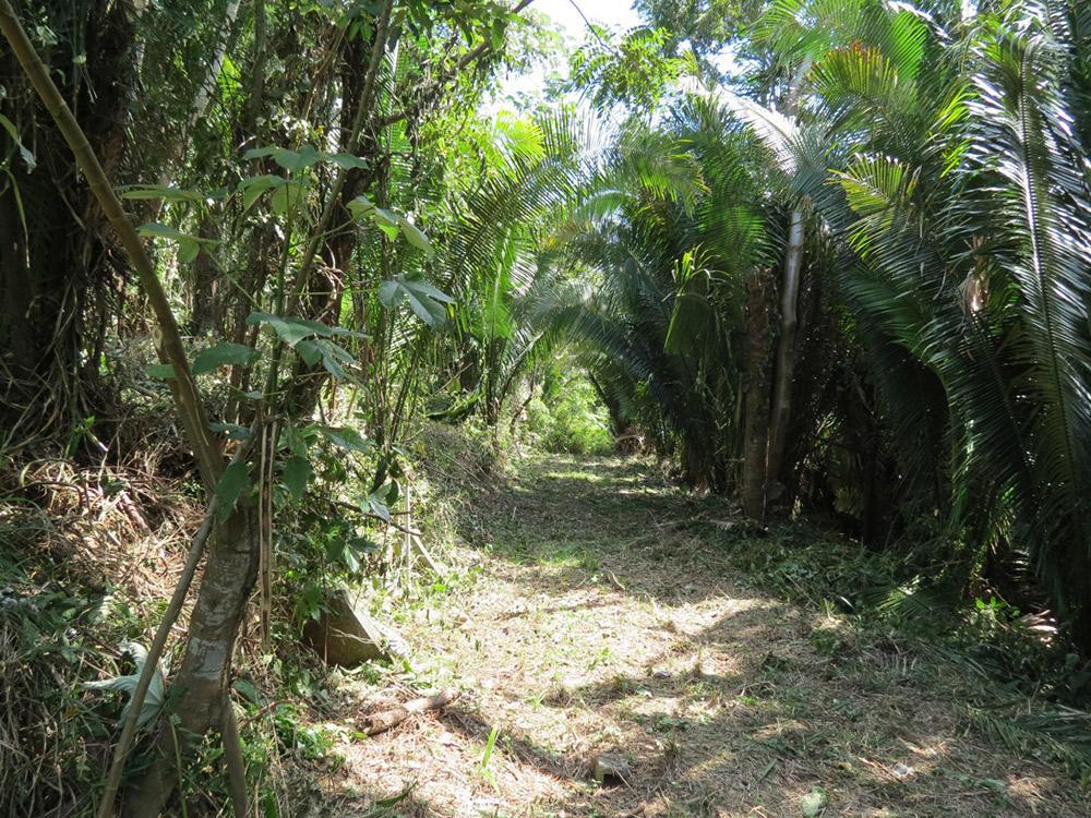 Roatan-Honduras-property-roatanlife16-530-7.jpg