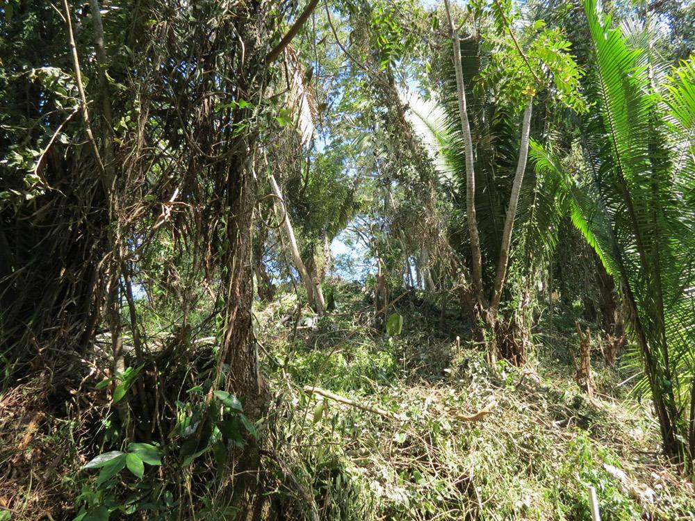 Roatan-Honduras-property-roatanlife16-530-8.jpg