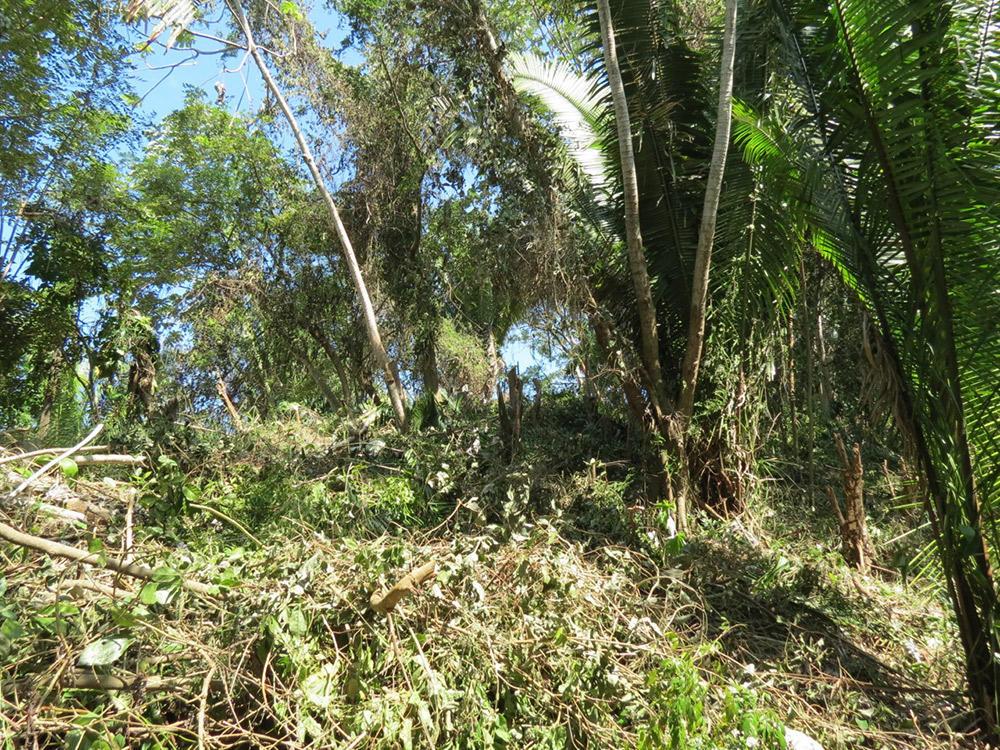 Roatan-Honduras-property-roatanlife16-530-9.jpg
